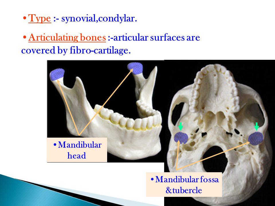 4 Type :- synovial,condylar. Articulating bones :-articular surfaces are covered by fibro-cartilage. Mandibular head Mandibular fossa &tubercle
