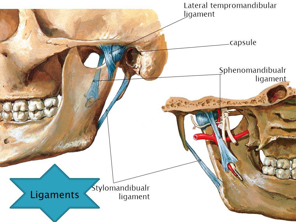  The lateral tempromandibular ligament Lateral tempromandibular ligament capsule Sphenomandibualr ligament Stylomandibualr ligament Ligaments
