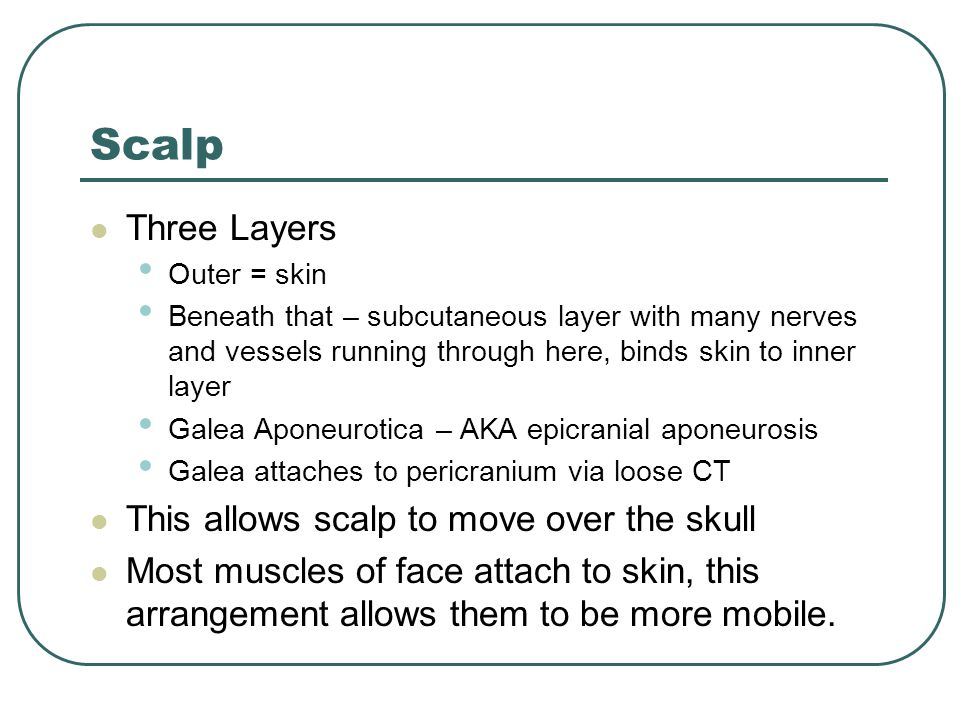 Scalp Three Layers Outer = skin Beneath that – subcutaneous layer with many nerves and vessels running through here, binds skin to inner layer Galea A