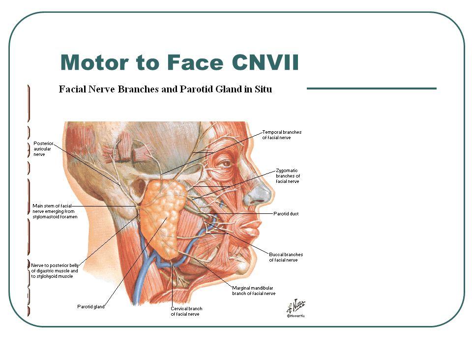 Motor to Face CNVII
