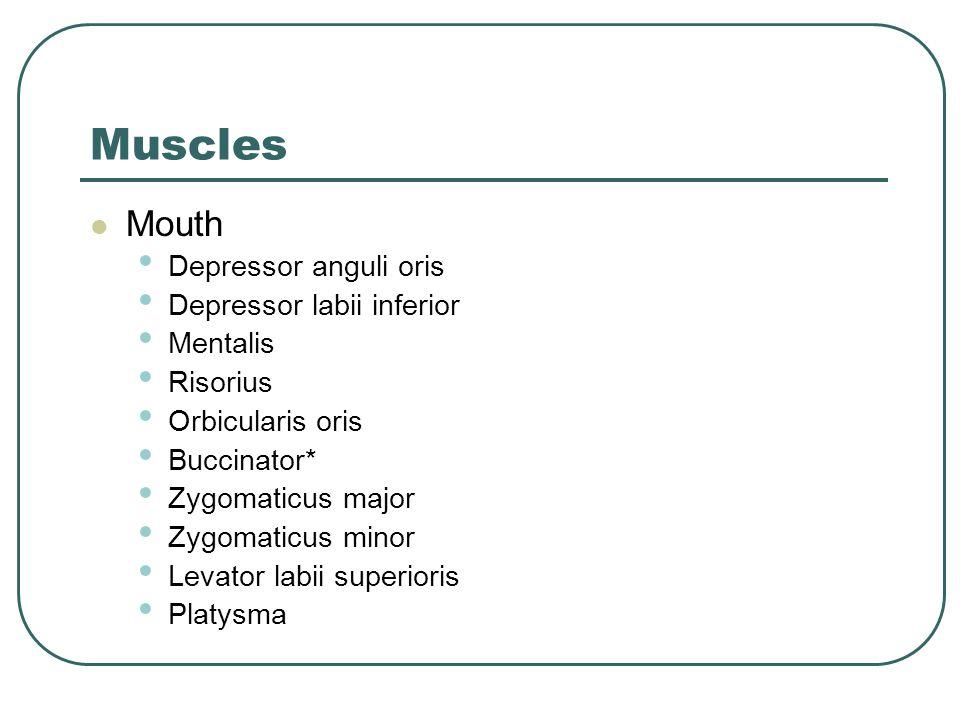 Muscles Mouth Depressor anguli oris Depressor labii inferior Mentalis Risorius Orbicularis oris Buccinator* Zygomaticus major Zygomaticus minor Levato