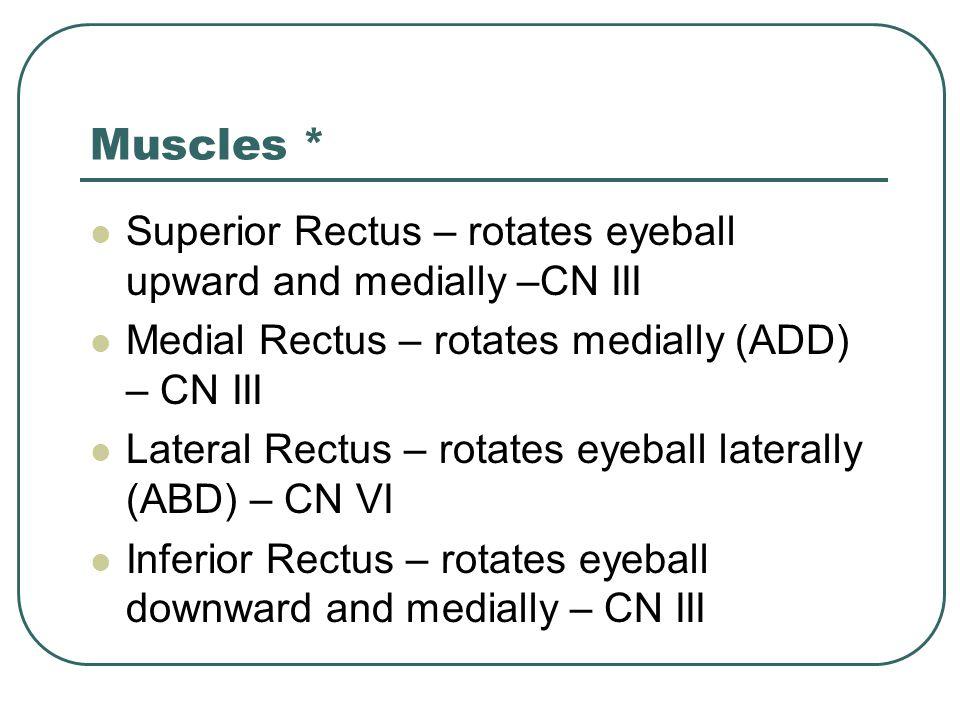 Muscles * Superior Rectus – rotates eyeball upward and medially –CN III Medial Rectus – rotates medially (ADD) – CN III Lateral Rectus – rotates eyeba