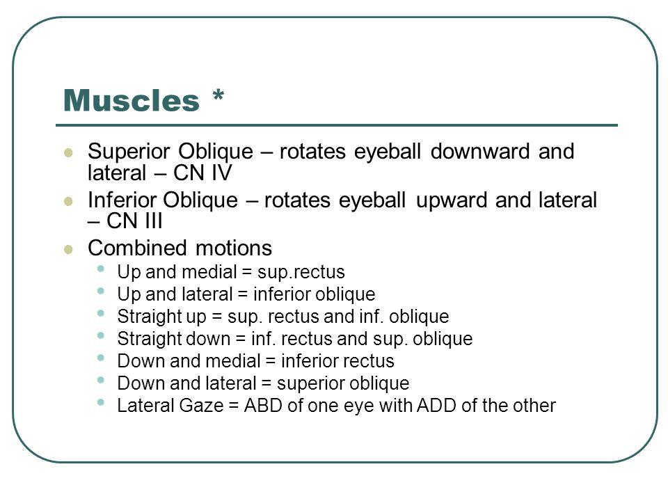 Muscles * Superior Oblique – rotates eyeball downward and lateral – CN IV Inferior Oblique – rotates eyeball upward and lateral – CN III Combined moti