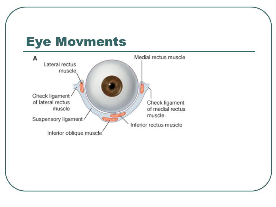 Eye Movments