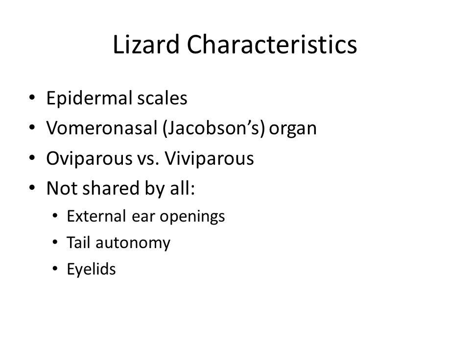 Lizard Characteristics Epidermal scales Vomeronasal (Jacobson's) organ Oviparous vs.