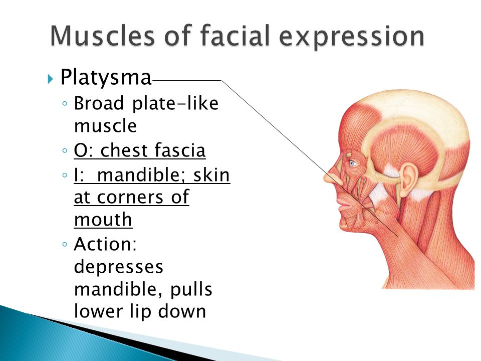  Platysma ◦ Broad plate-like muscle ◦ O: chest fascia ◦ I: mandible; skin at corners of mouth ◦ Action: depresses mandible, pulls lower lip down