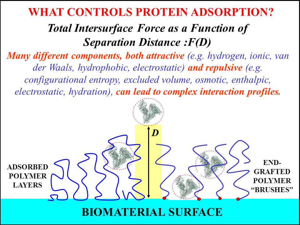 Total Intersurface Force as a Function of Separation Distance :F(D) WHAT CONTROLS PROTEIN ADSORPTION.