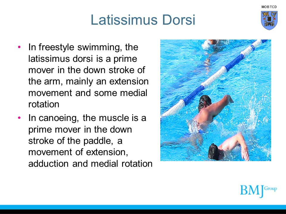 In freestyle swimming, the latissimus dorsi is a prime mover in the down stroke of the arm, mainly an extension movement and some medial rotation In c