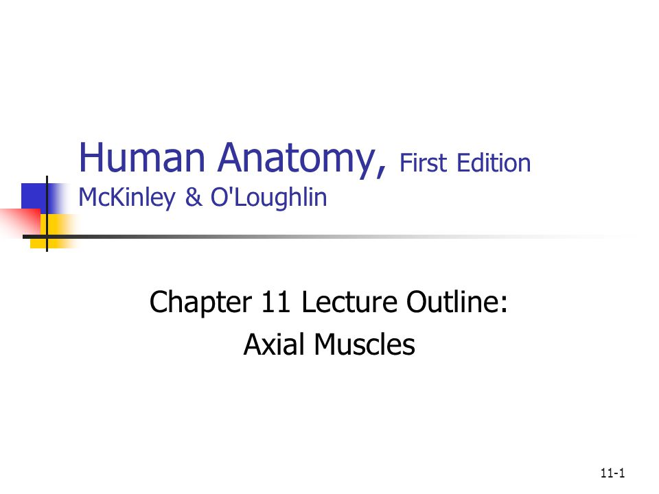 11-1 Human Anatomy, First Edition McKinley & O'Loughlin Chapter 11 Lecture Outline: Axial Muscles