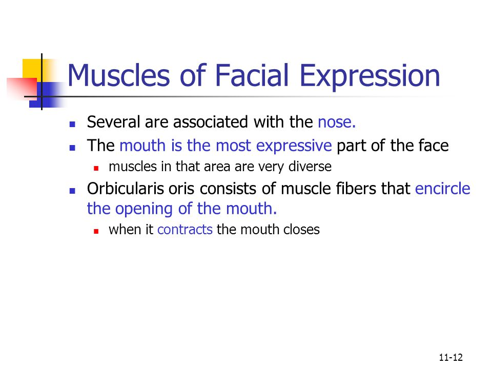 11-12 Muscles of Facial Expression Several are associated with the nose.