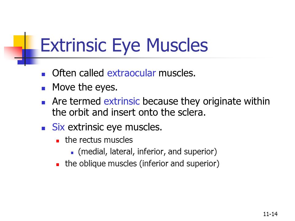 11-14 Extrinsic Eye Muscles Often called extraocular muscles.