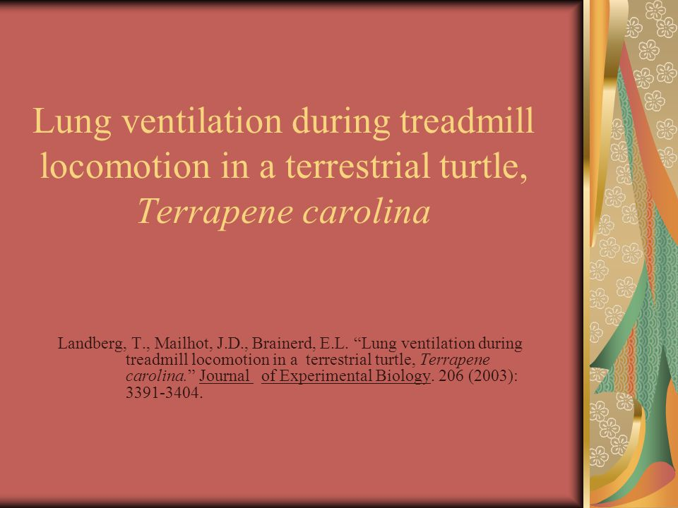 Lung ventilation during treadmill locomotion in a terrestrial turtle, Terrapene carolina Landberg, T., Mailhot, J.D., Brainerd, E.L.