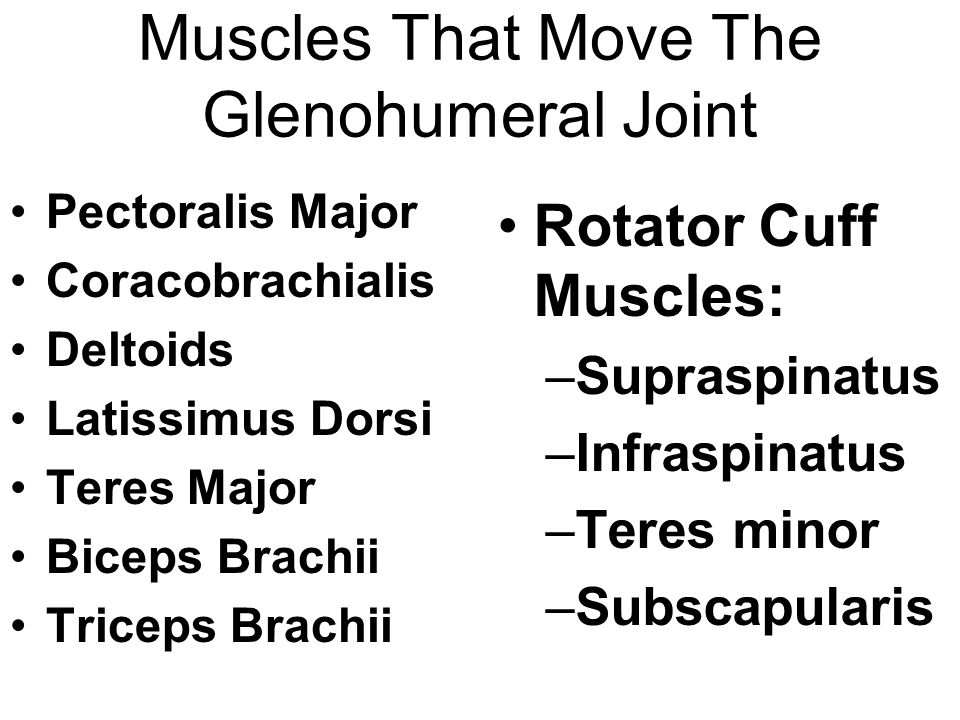 Muscles That Move The Glenohumeral Joint Pectoralis Major Coracobrachialis Deltoids Latissimus Dorsi Teres Major Biceps Brachii Triceps Brachii Rotator Cuff Muscles: –Supraspinatus –Infraspinatus –Teres minor –Subscapularis