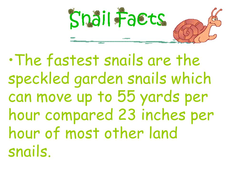 The largest land snail ever found was 15 inches long and weighed 2 pounds.
