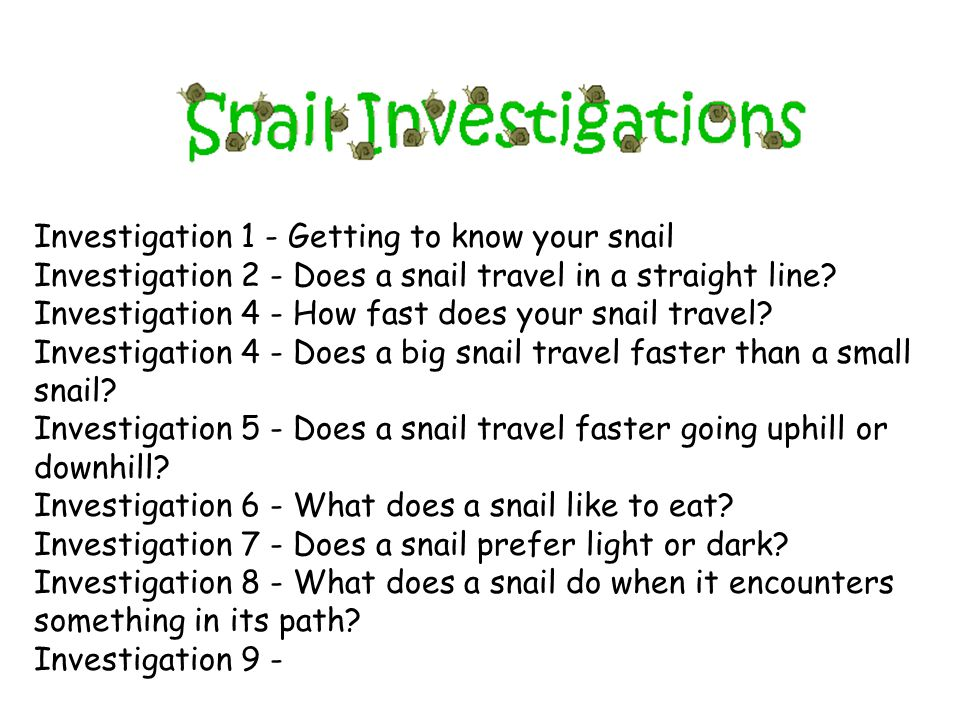 Investigation 1 - Getting to know your snail Investigation 2 - Does a snail travel in a straight line.