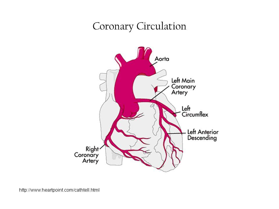Coronary Circulation http://www.heartpoint.com/cathtell.html