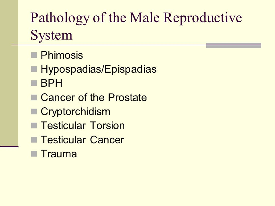 Pathology of the Male Reproductive System Phimosis Hypospadias/Epispadias BPH Cancer of the Prostate Cryptorchidism Testicular Torsion Testicular Canc