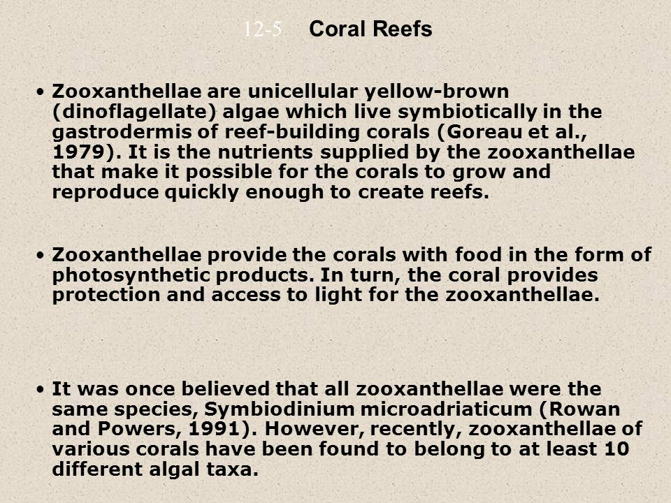 Zooxanthellae are unicellular yellow-brown (dinoflagellate) algae which live symbiotically in the gastrodermis of reef-building corals (Goreau et al.,