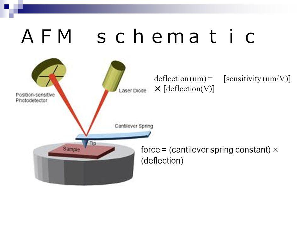 AFM schematic deflection (nm) = [sensitivity (nm/V)] × [deflection(V)] force = (cantilever spring constant) × (deflection)