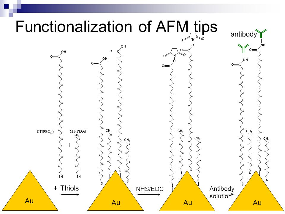 Functionalization of AFM tips NHS/EDC Antibody solution SH CH 3 Thiols+ + OH SH O C CT(PEG 12 ) MT(PEG 4 ) Au S O C OH S O C S CH 3 S Au S O C O O N O S CH 3 S S O C O O N O Au S CH 3 S NH S O C S O C Au antibody