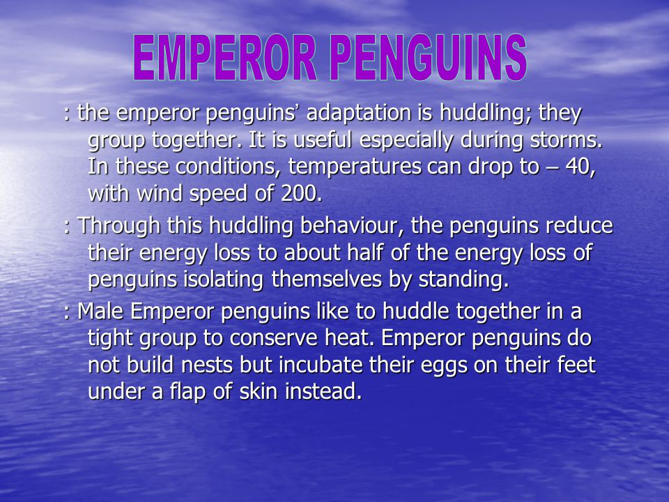 : the emperor penguins ' adaptation is huddling; they group together.