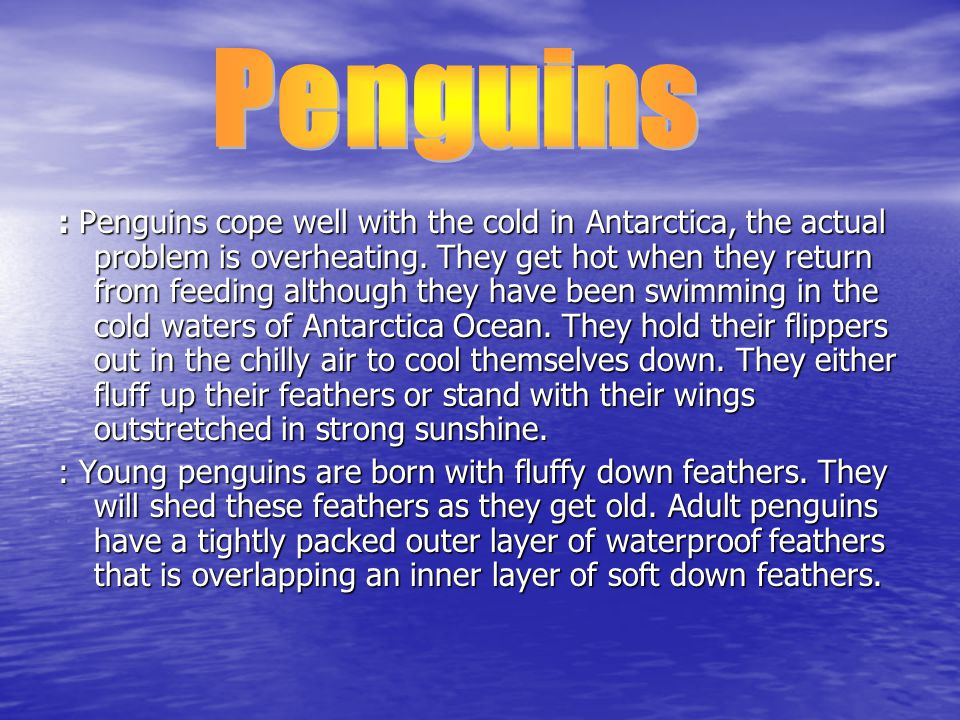 : Penguins cope well with the cold in Antarctica, the actual problem is overheating.