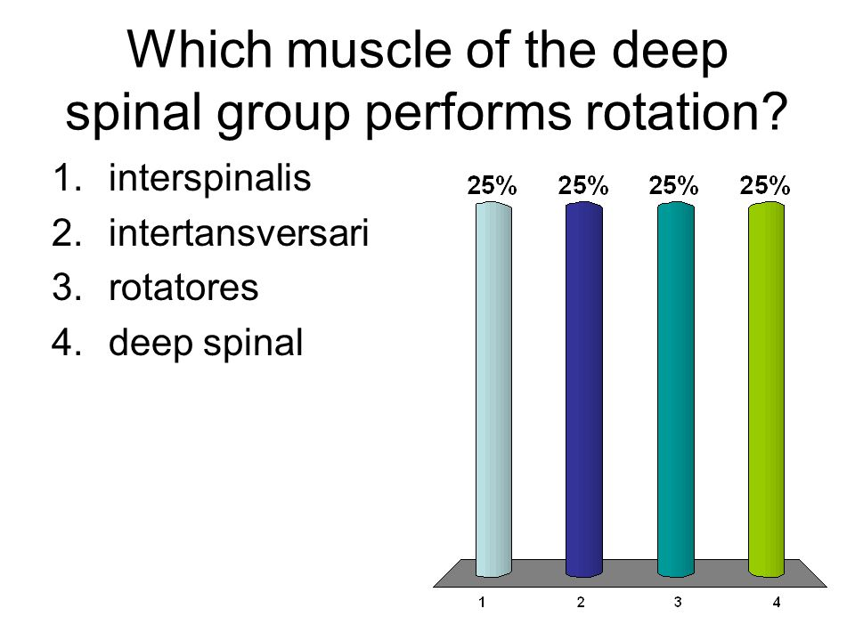 Which muscle of the deep spinal group performs rotation? 1.interspinalis 2.intertansversari 3.rotatores 4.deep spinal