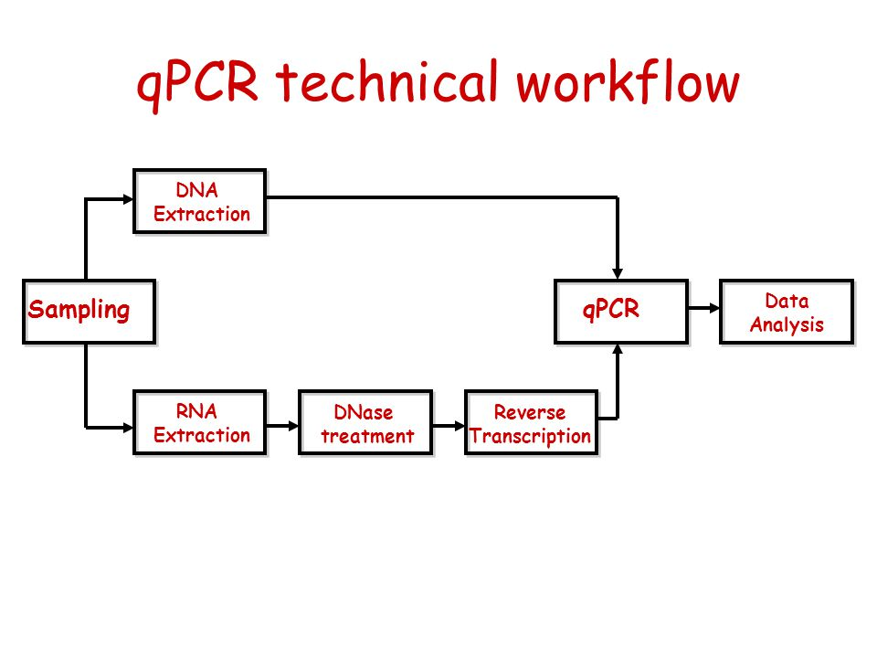 qPCR technical workflow Sampling DNA Extraction RNA Extraction DNase treatment Reverse Transcription qPCR Data Analysis
