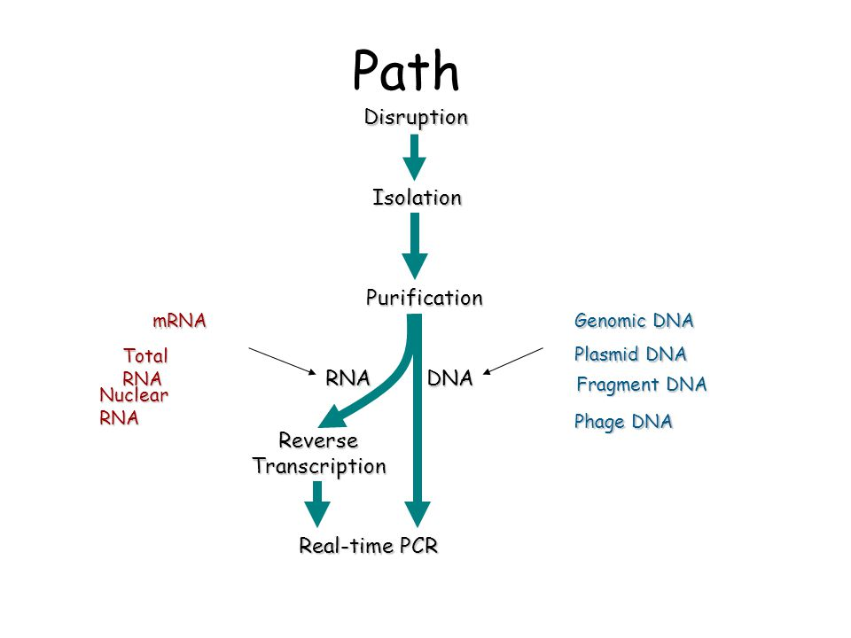 Path Genomic DNA Plasmid DNA mRNA Total RNA Fragment DNA Nuclear RNA Phage DNA ReverseTranscription Real-time PCR DNARNA Purification IsolationDisrupt