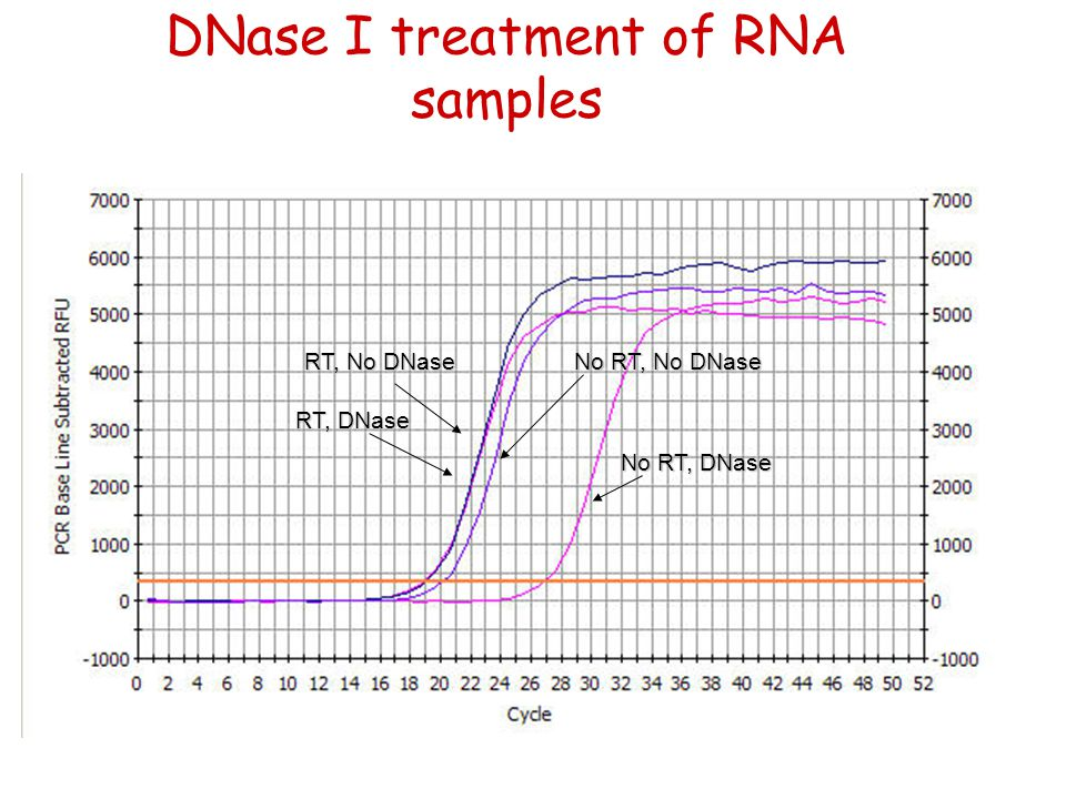DNase I treatment of RNA samples No RT, DNase RT, DNase RT, No DNase No RT, No DNase