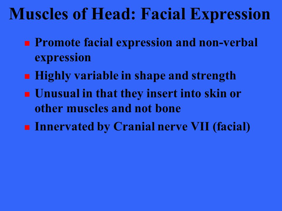 Muscles of Head: Facial Expression Promote facial expression and non-verbal expression Highly variable in shape and strength Unusual in that they inse
