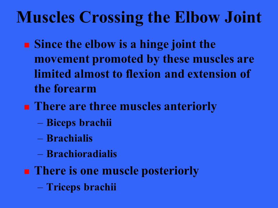 Muscles Crossing the Elbow Joint Since the elbow is a hinge joint the movement promoted by these muscles are limited almost to flexion and extension o