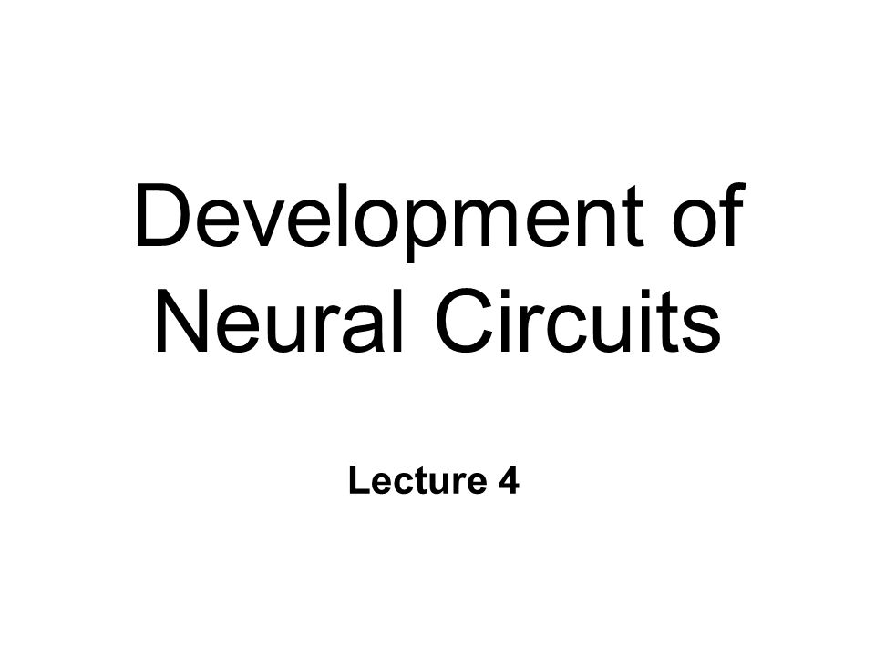 Development of Neural Circuits Lecture 4