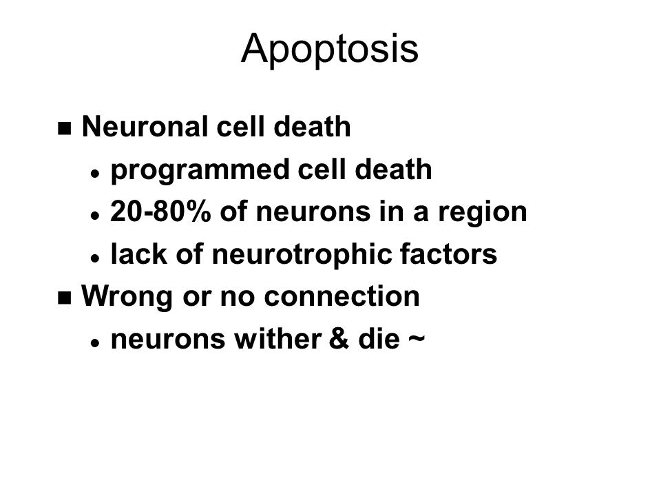 Apoptosis n Neuronal cell death l programmed cell death l 20-80% of neurons in a region l lack of neurotrophic factors n Wrong or no connection l neurons wither & die ~