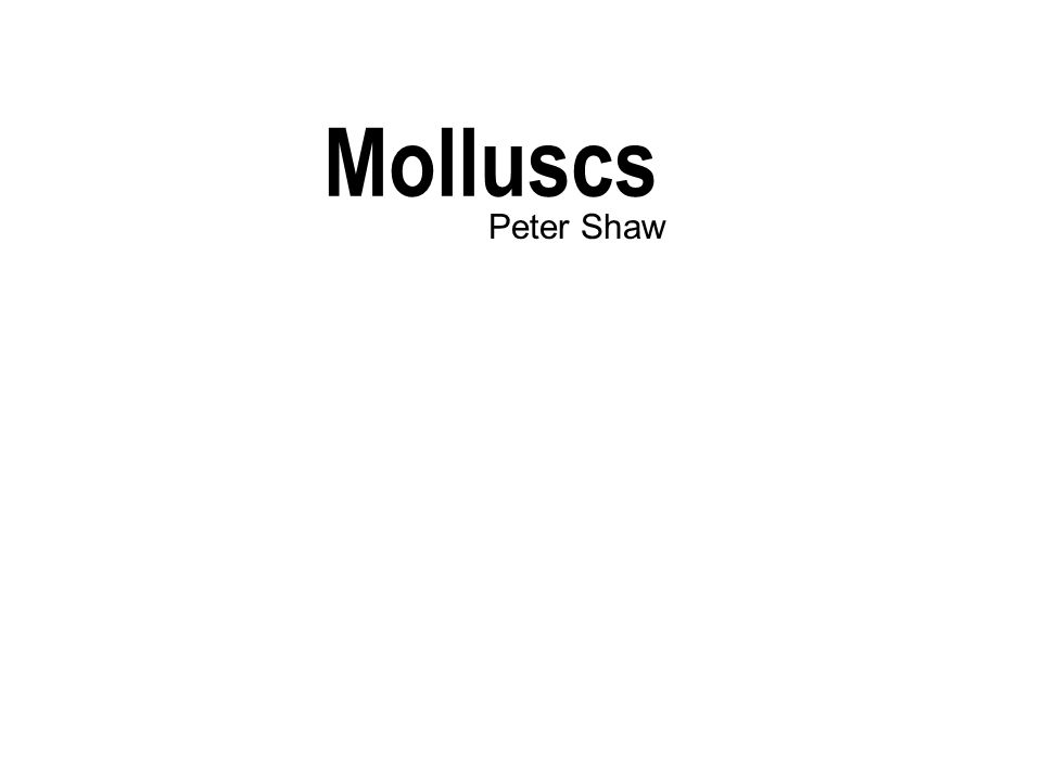 Molluscs Peter Shaw