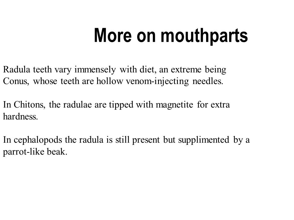More on mouthparts Radula teeth vary immensely with diet, an extreme being Conus, whose teeth are hollow venom-injecting needles.