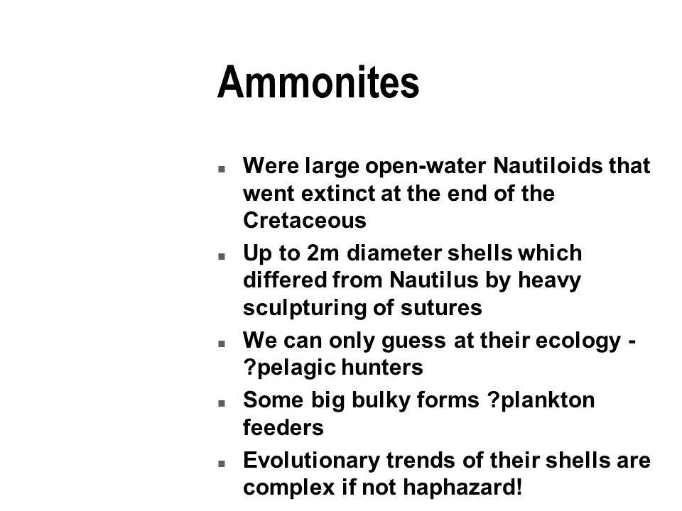 Ammonites n Were large open-water Nautiloids that went extinct at the end of the Cretaceous n Up to 2m diameter shells which differed from Nautilus by heavy sculpturing of sutures n We can only guess at their ecology - pelagic hunters n Some big bulky forms plankton feeders n Evolutionary trends of their shells are complex if not haphazard!