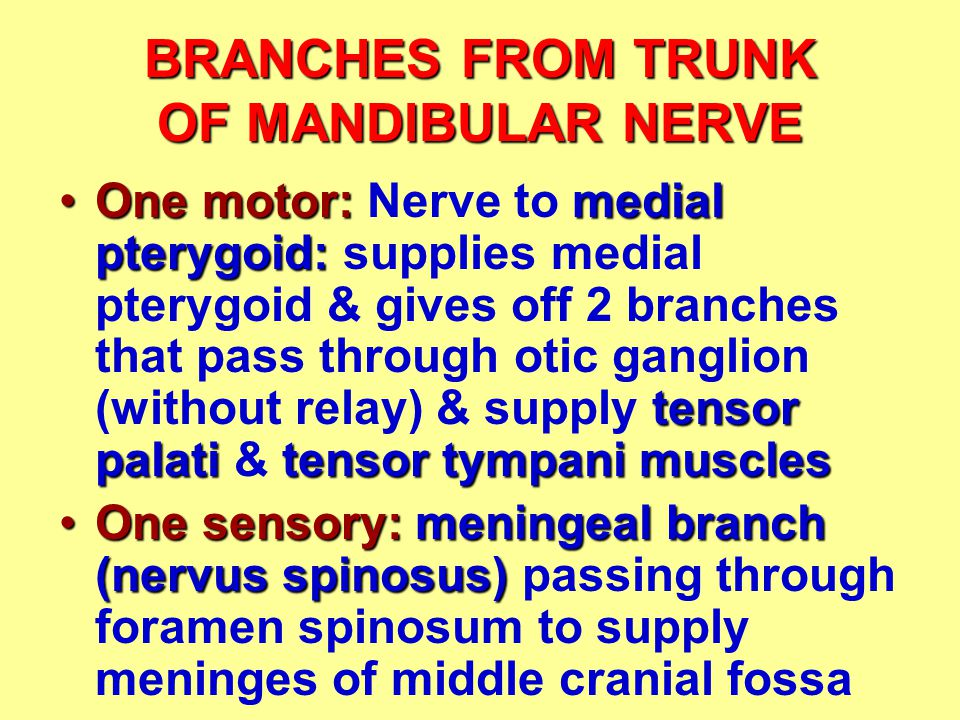 BRANCHES FROM TRUNK OF MANDIBULAR NERVE One motor: medial pterygoid: tensor palatitensor tympani musclesOne motor: Nerve to medial pterygoid: supplies