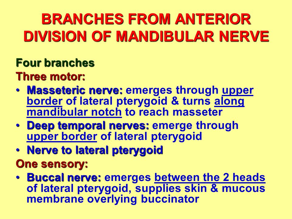 BRANCHES FROM ANTERIOR DIVISION OF MANDIBULAR NERVE Four branches Three motor: Masseteric nerve:Masseteric nerve: emerges through upper border of late