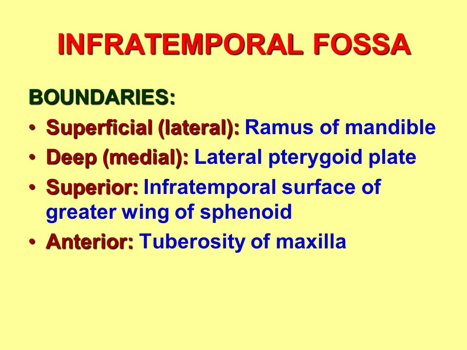 INFRATEMPORAL FOSSA BOUNDARIES: Superficial (lateral):Superficial (lateral): Ramus of mandible Deep (medial):Deep (medial): Lateral pterygoid plate Su