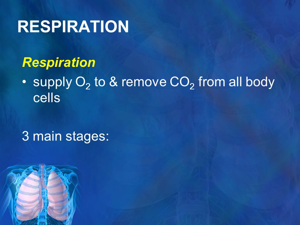 RESPIRATION Respiration supply O 2 to & remove CO 2 from all body cells 3 main stages: