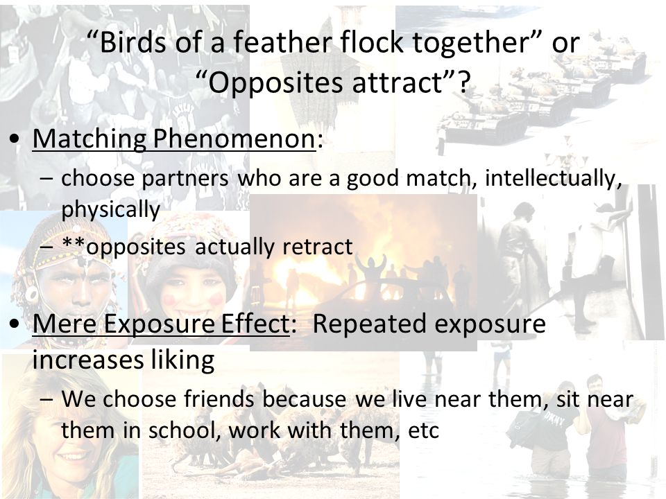 Birds of a feather flock together or Opposites attract .