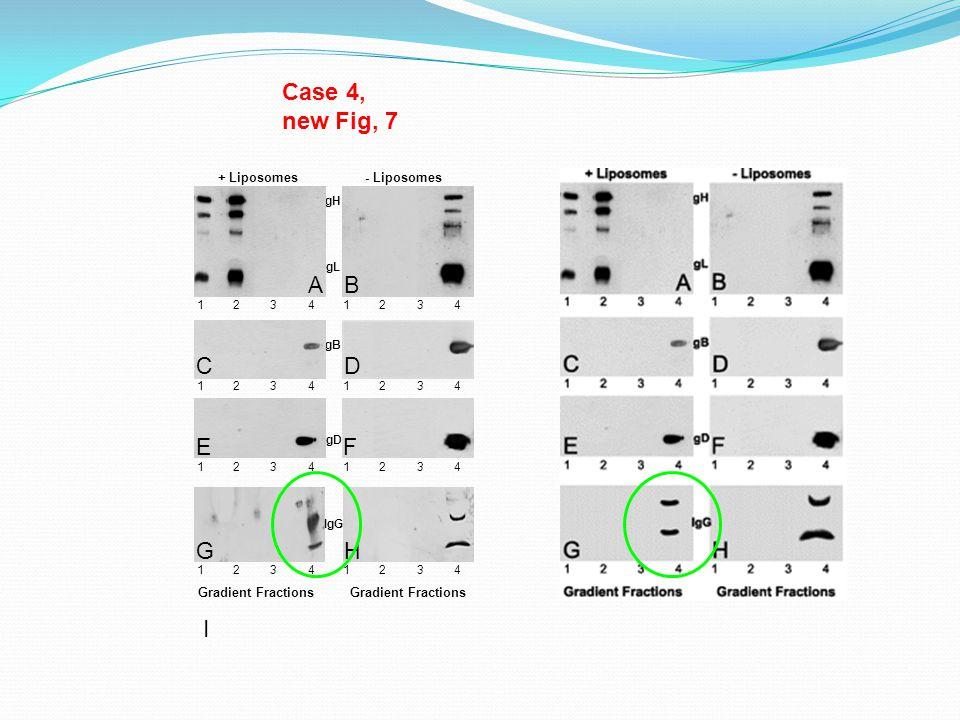 Case 4, new Fig, 7 gL gH + Liposomes- Liposomes gB gD 12341234 1234 1234 12341234 1234 1234 Gradient Fractions A B D F HG E I C IgG