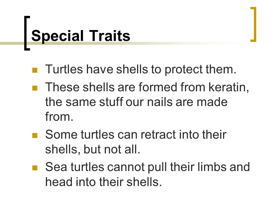 Special Traits Turtles have shells to protect them. These shells are formed from keratin, the same stuff our nails are made from. Some turtles can ret