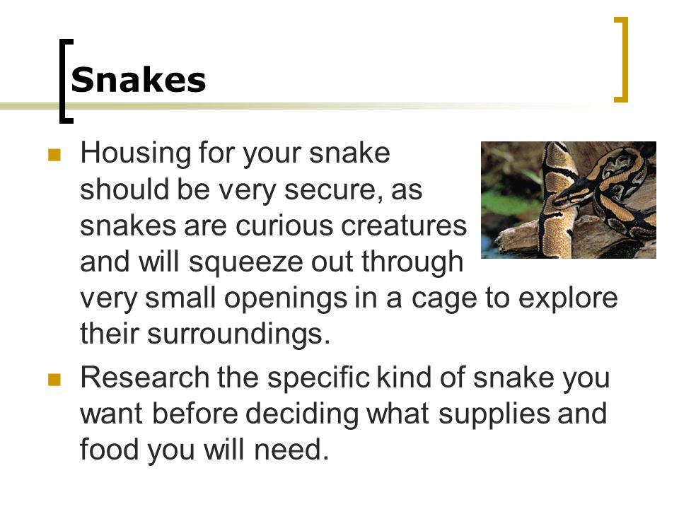 Snakes Housing for your snake should be very secure, as snakes are curious creatures and will squeeze out through very small openings in a cage to exp