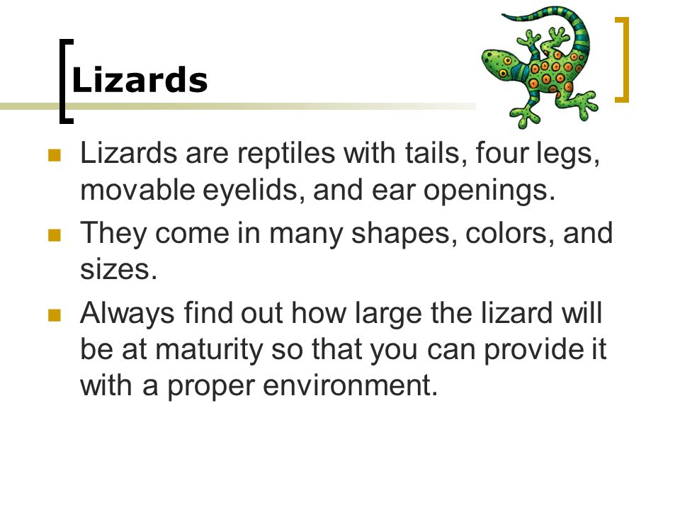 Lizards Lizards are reptiles with tails, four legs, movable eyelids, and ear openings. They come in many shapes, colors, and sizes. Always find out ho