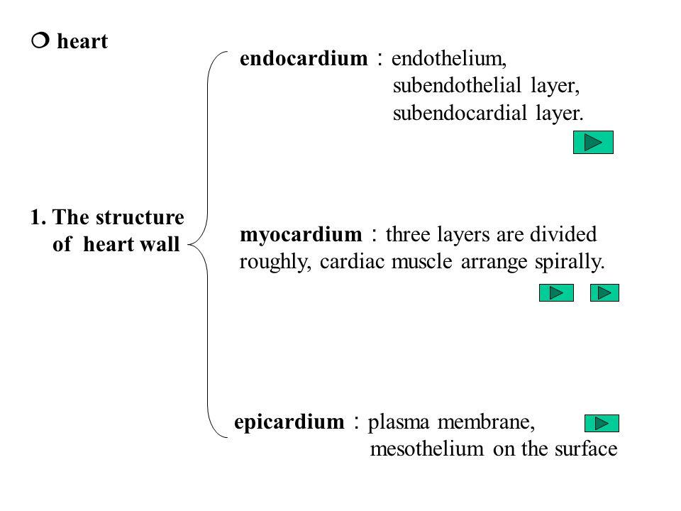  heart 1.
