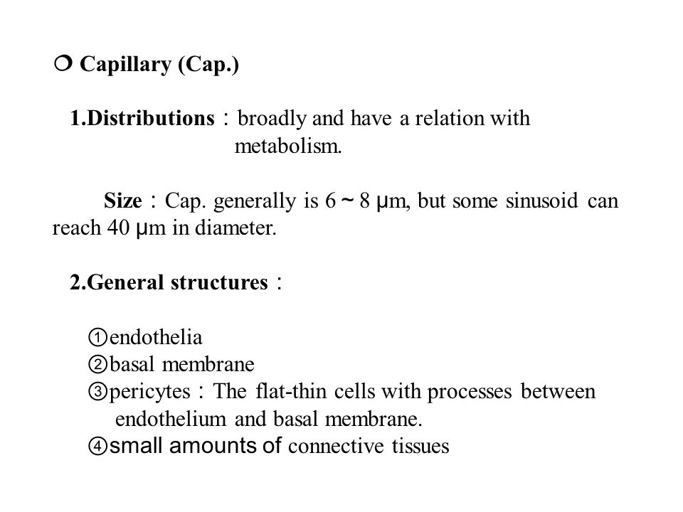  Capillary (Cap.) 1.Distributions : broadly and have a relation with metabolism.