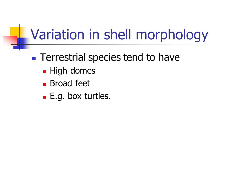 Variation in shell morphology Terrestrial species tend to have High domes Broad feet E.g.