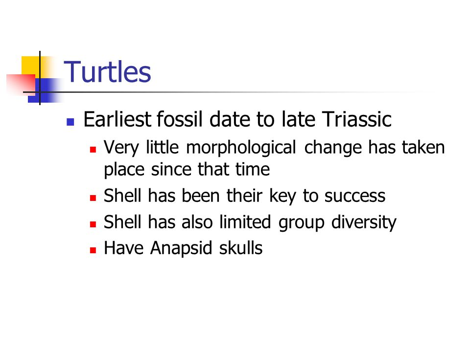 Turtles Earliest fossil date to late Triassic Very little morphological change has taken place since that time Shell has been their key to success Shell has also limited group diversity Have Anapsid skulls